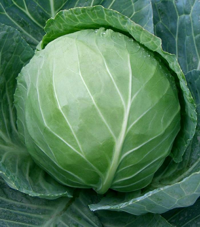 grünes gemüse gesund essen weißkohl richtig auswählen