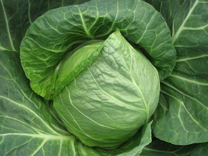 grünes gemüse weißkohl gemüsesorte gesund essen