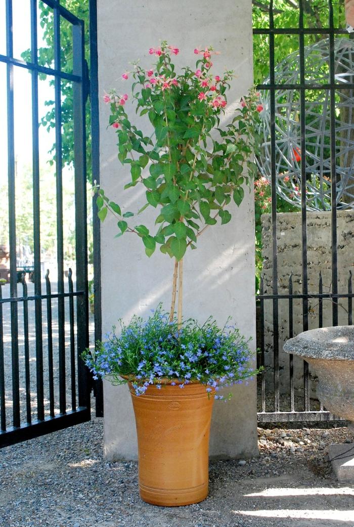 Große Pflanzkübel lassen den Garten großartig erscheinen