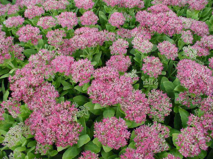 Deko ideen garten mit herbstblumen f r eine gute stimmung im herbst - Pflegeleichte pflanzen fur den garten ...