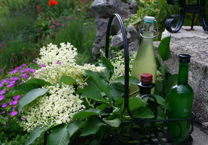 holunderblütensirup gesunder saft sommergetränk