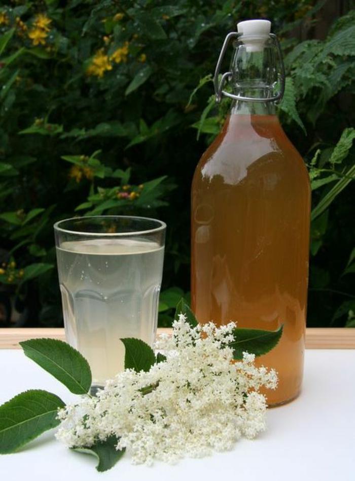 holunderblütensirup weiße blüten glasflasche