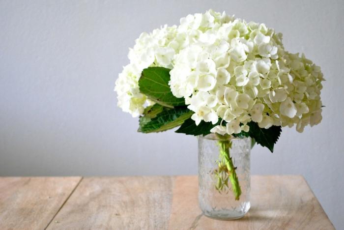 hortensien weiße blüten klassisch tischdeko gartenpflanze