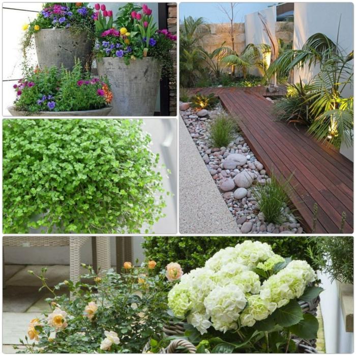 K belpflanzen im garten gartenideen mit viel potenzial - Topfpflanzen garten ...