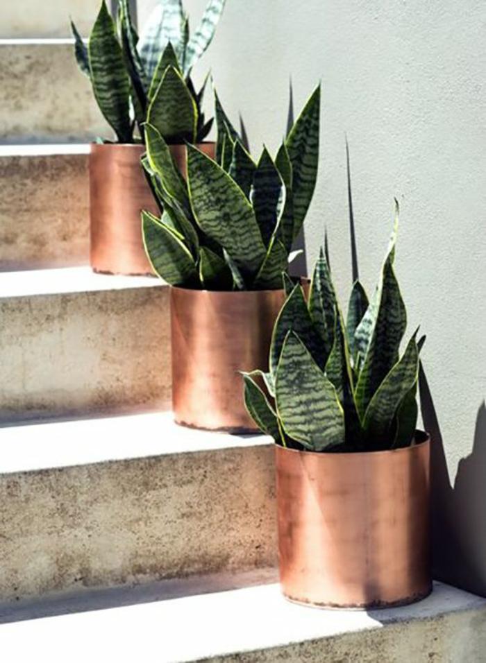 kübelpflanzen vorgartengestaltung ideen kübel kupfer pflanze