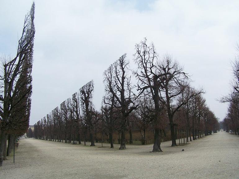 optische täuschungen bilder schöne naturbilder schönbrun park bäume