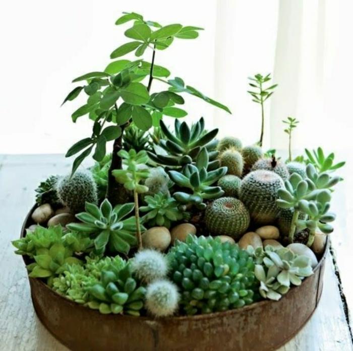 pflegeleichte zimmerpflanzen bilder kübelpflanzen sukkulenten