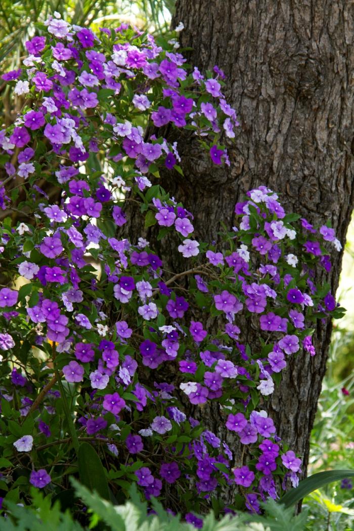 Farbenfrohe schattenpflanzen f r ihren garten - Schattenpflanzen garten ...