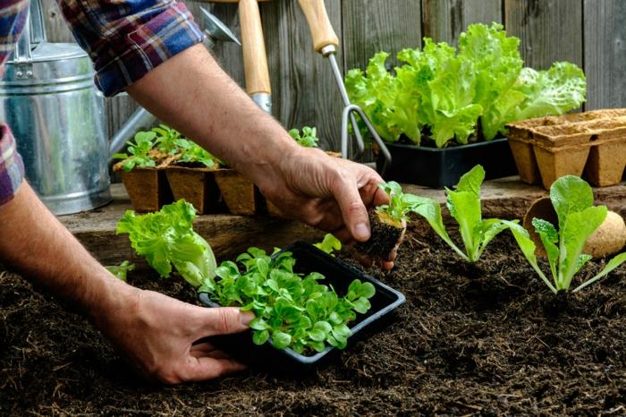 terrasse gestalten gemüse passende container
