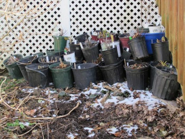 topf pflanzen im winter aufheben blumentöpfe aufbewahren