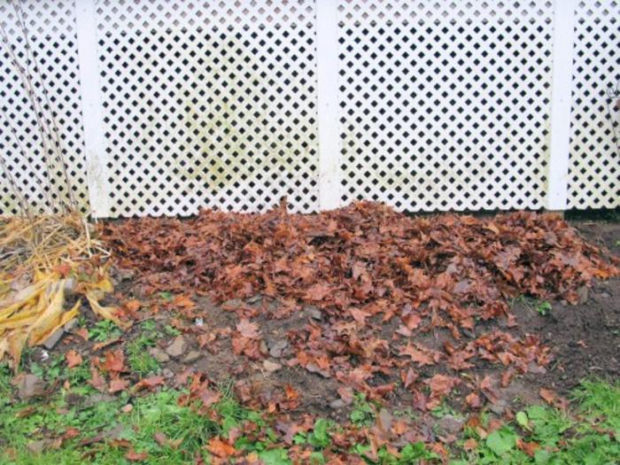 topf pflanzen im winter aufheben tipps und tricks im garten