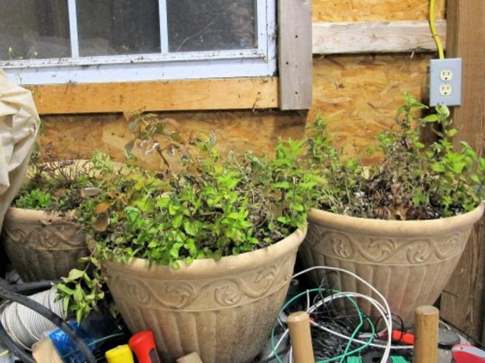 topfpflanzen im winter aufheben tipps und tricks
