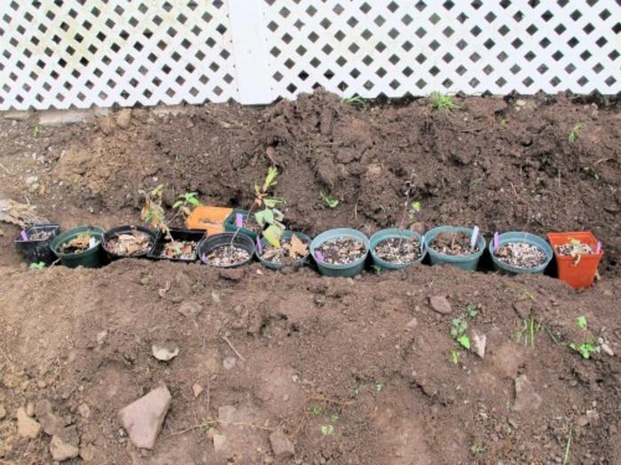 topfpflanzen im winter aufheben wie wird es gemacht