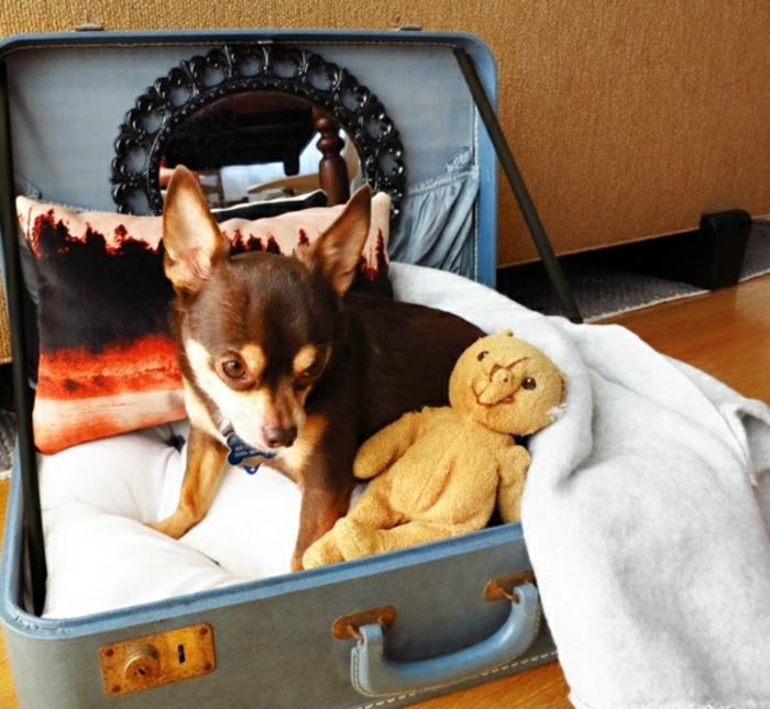vintage koffer hundebett blau