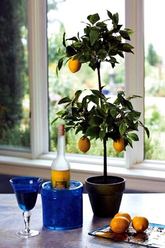 zitronenbaum pflege dekoideen pflanzen