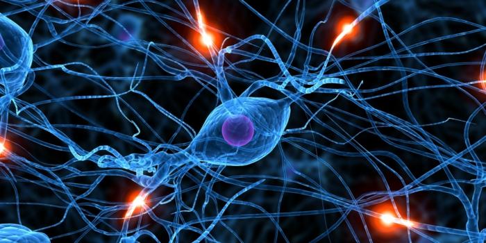 Biorhythmus neurone