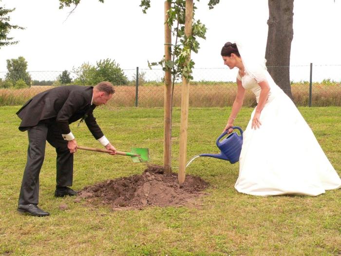 Hochzeit planen ehebaum einplfanzen