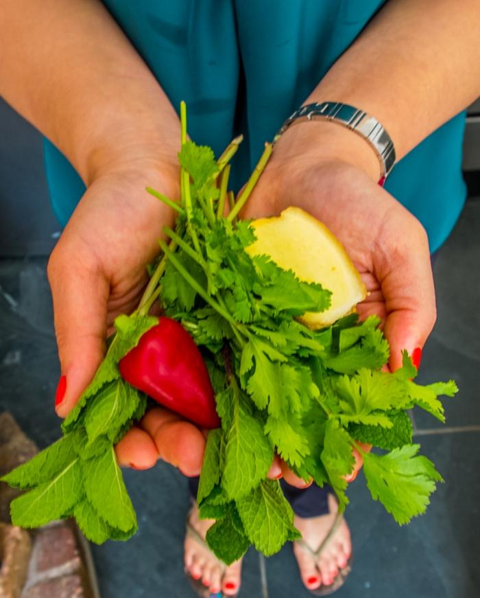 Koriander Pflanzen thai küche