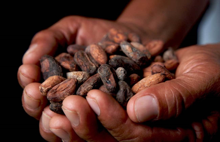 Cocoa Beans Chocolate Facts