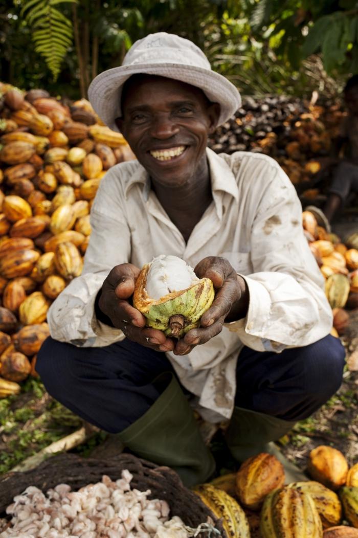 fairtrade schokolade kakaobohnen kakaofrüchte