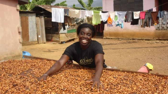 fairtrade schokolade kakaobohnen trocknen ernte