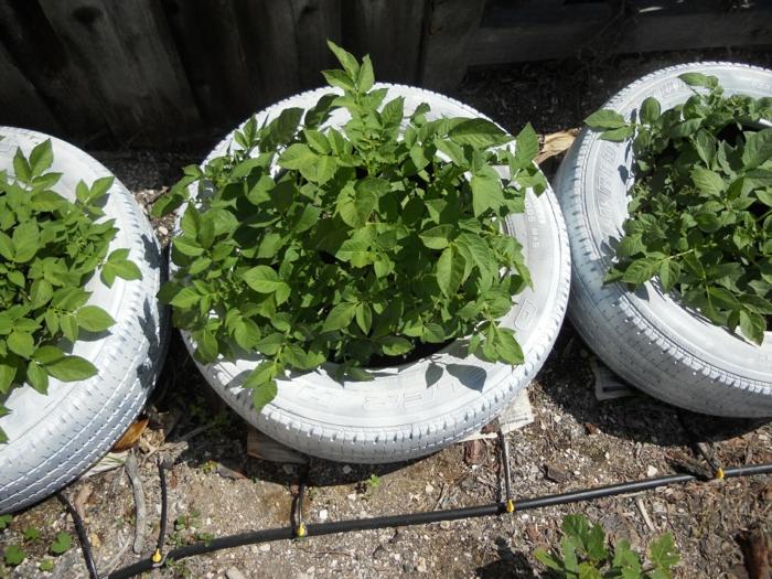 gartenideen alte autoreifen weiß streichen gartenpflanzen