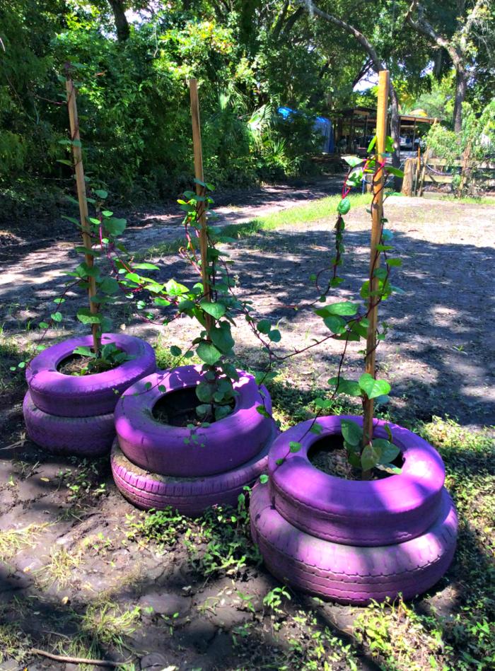 Kreative gartentipps pflanzencontainer aus alten autoreifen - Mobel aus alten autoreifen ...