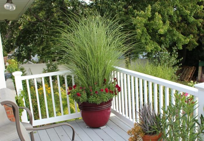 gartenpflanzen balkonpflanzen dekoideen kübelpflanzen