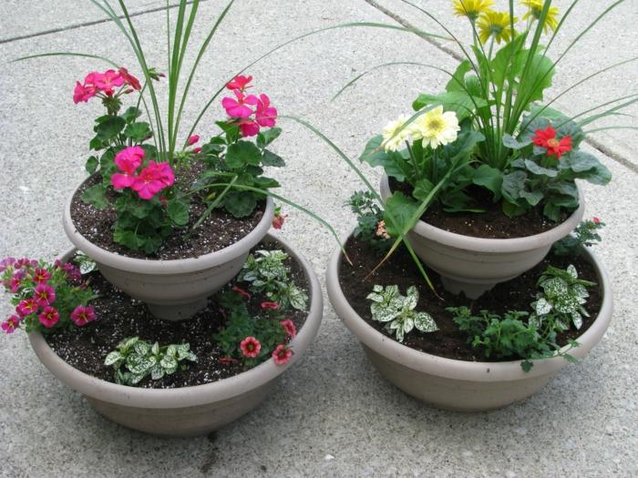 gartenpflanzen küebelpflanzen außenbereich gestalten ideen