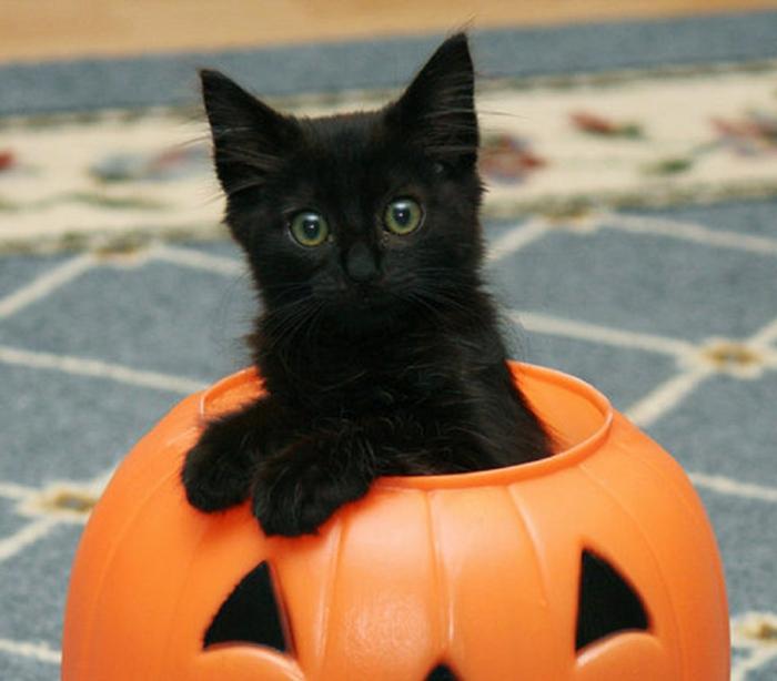 halloween ideen dekoideen kürbiss schwarze katze