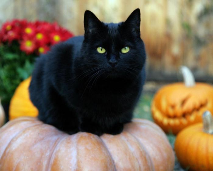 halloween masken schwarze katze symbol