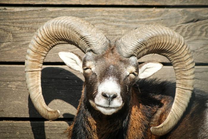 horoskop widder 2015 herbst sympathisches tier