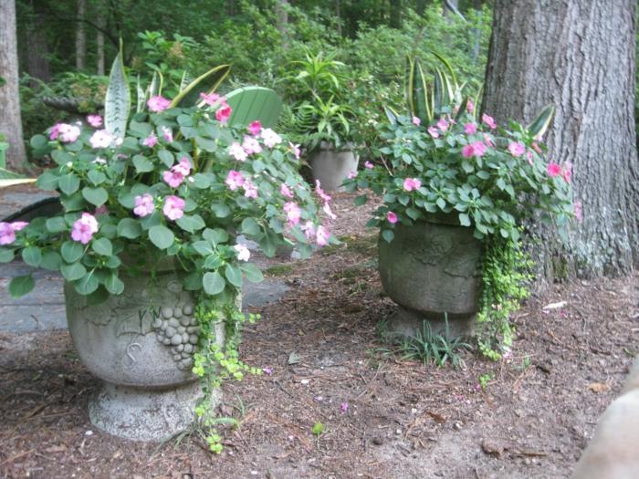 kübelpflanzen gartenideen schöne dekoideen