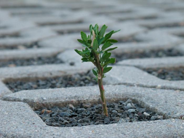 resilienz definition gesundheit und psyche