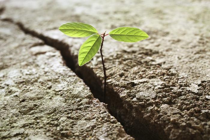resilienz widerstandskraft anpassungsfähigkeit