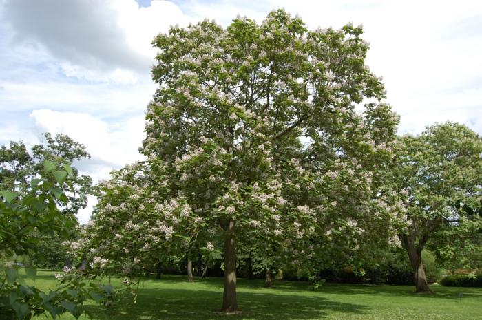 trompetenbaum blattwerk blüten