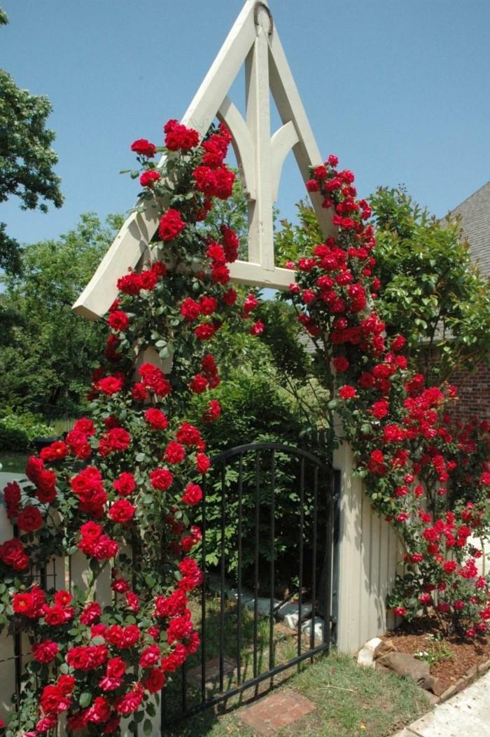 vorgarten gestaltung eingang mit rosen dekorieren