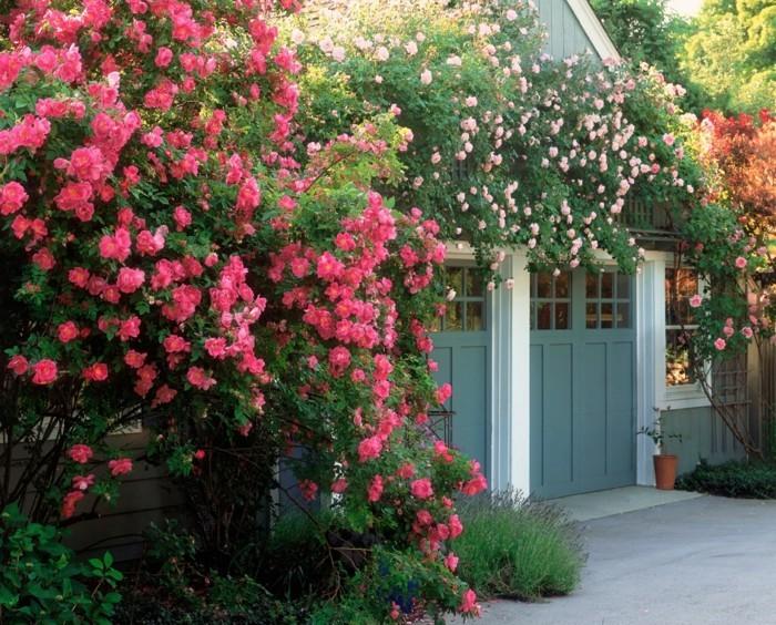vorgarten gestaltung englischer garten mit wunderschönen pflanzen