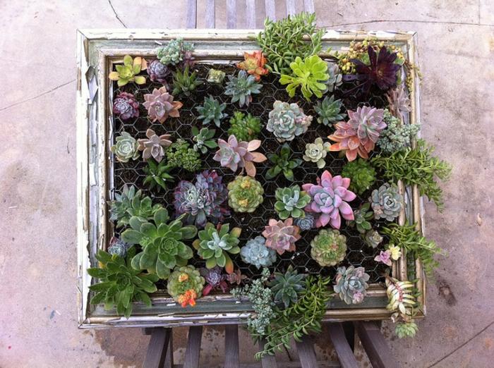 projeto de paredes faça você mesmo verticais de jardim, rede de arame suculentas