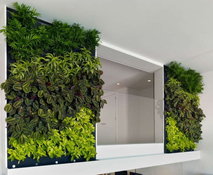 paredes moldam plantas verdes frescas simetricamente