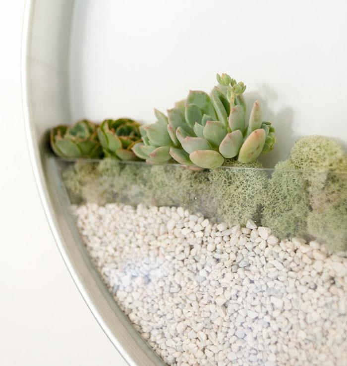projetar paredes em volta de recipientes seixos suculentos