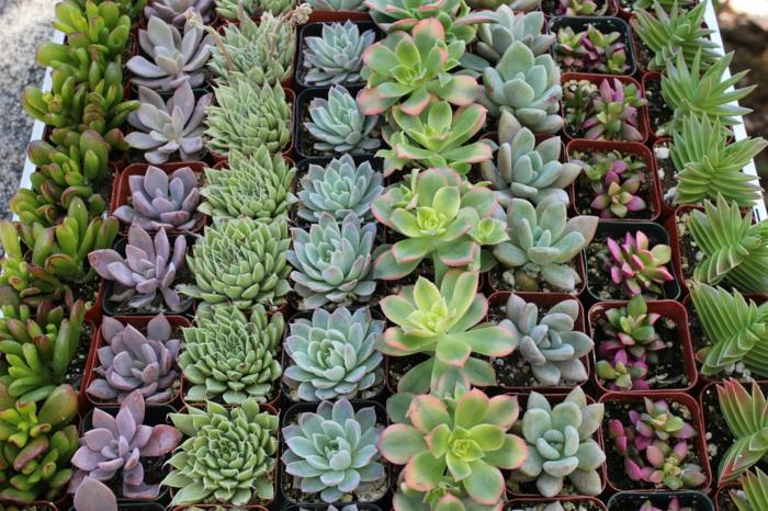 design de paredes veritkaler jardim decoração de parede suculentas