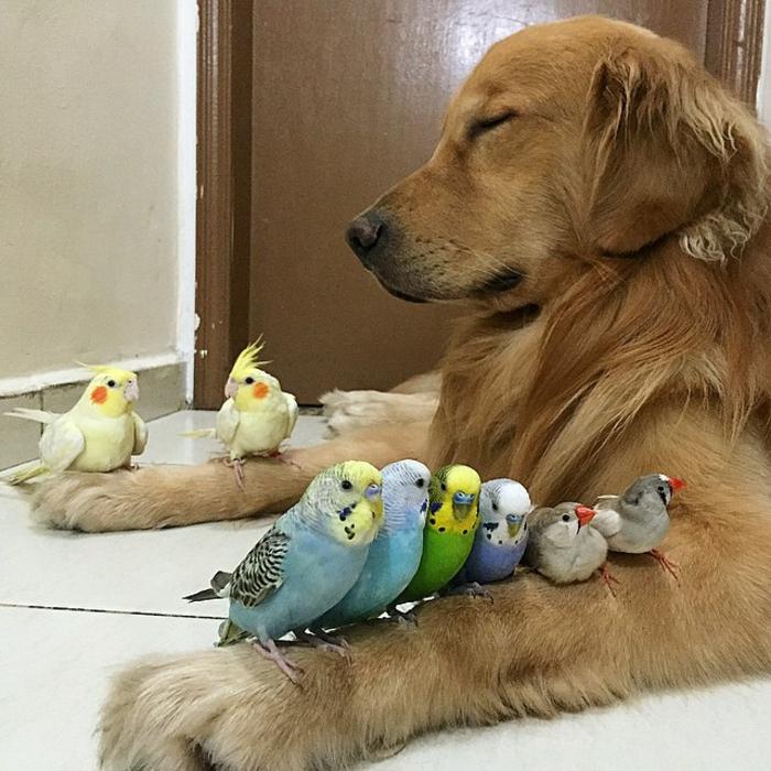 wellensittich kaufen haustiere pflege wellensittliche und hunde
