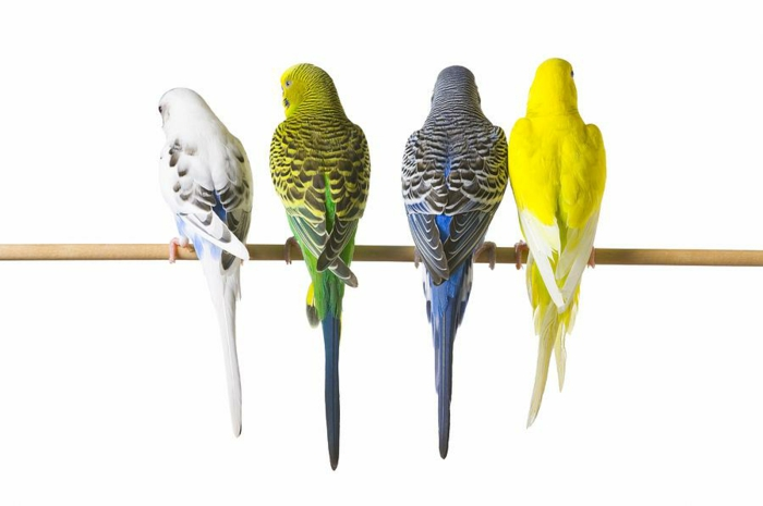 wellensittich namen haustiere pflege tierwelt