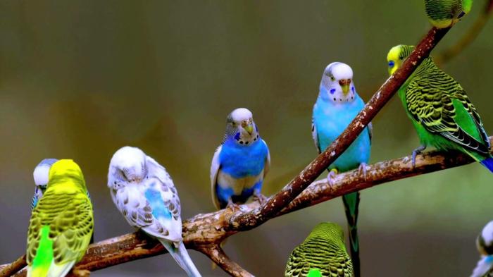 wellensittiche im freien haustiere pflege tierwelt