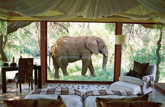 zimmer dekorieren ausblick elefant südafrika