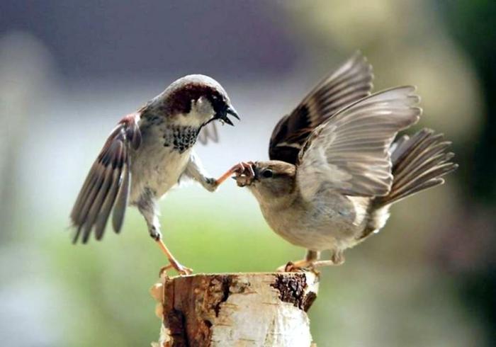 Körpersprache lesen verstehen beispiele vogeln