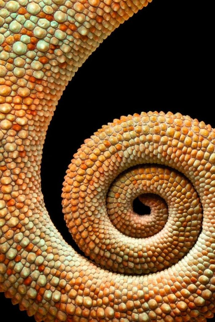 Yin Yang Bedeutung prrogress fluss unednlichkeit