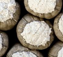 Was zeichnet die Bio Baumwolle aus?