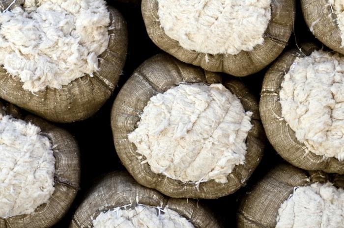 bio baumwolle ernte volle säcke